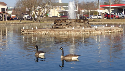 lake ducks 2