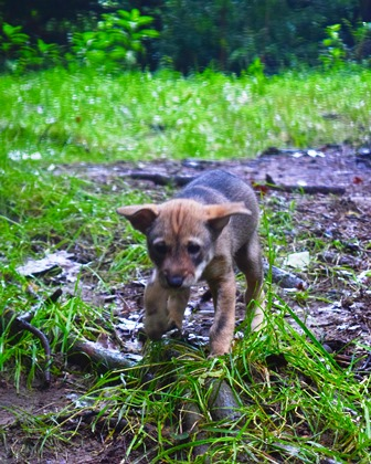 Zoo Knoxville's red wolf pup now has a name