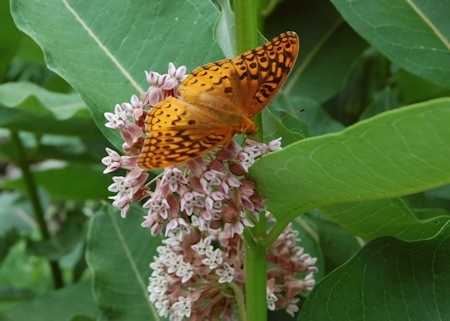 Butterfly Festival to be held at UT Arboretum in Oak Ridge this Saturday