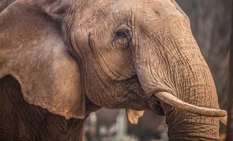 Zoo Knoxville throwing an elephant birthday party