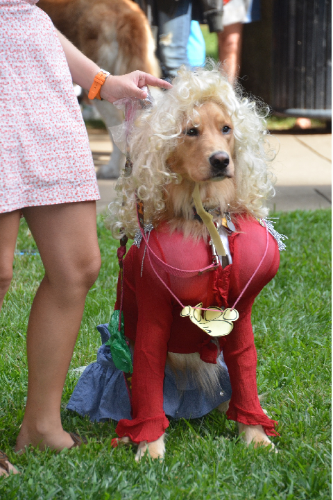 'History Hound' Dog Costume Contest
