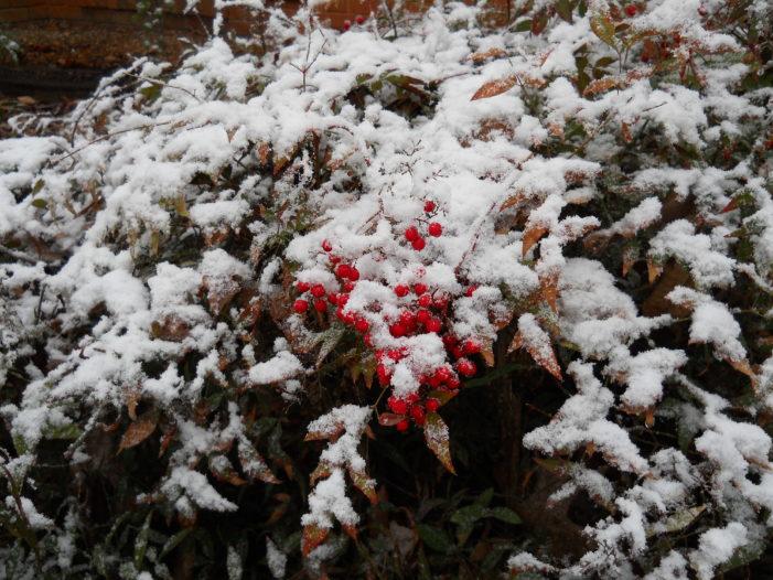 February Snows